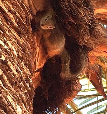 kal tree squirrel web small