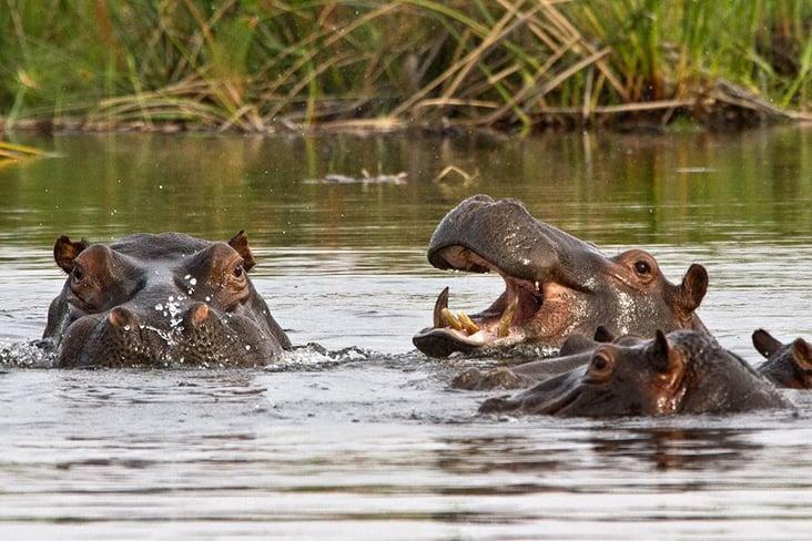 Hippo's at Namushasha River Lodge