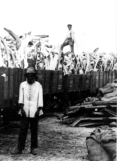 Whale bones are loaded onto railway trucks.  (Source: National Archives)