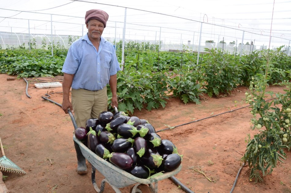 The Gondwana Self-Sufficiency Centre (SSC) - Rights to Michael Spencer