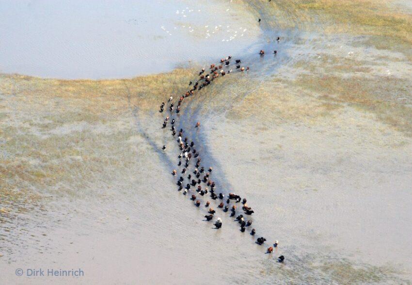 Flooded and dry Oshana ©Gondwana Collection Namibia