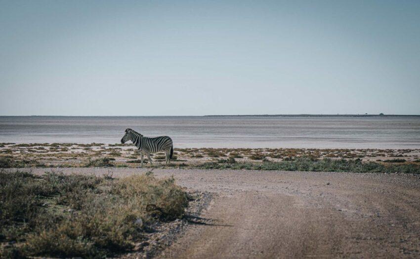 Africa-Namibia-Etosha-National-Park-zebra-06848-1400x864-e1603868257248-2.jpg 61.7kb Africa-Namibia-Etosha-National-Park-zebra