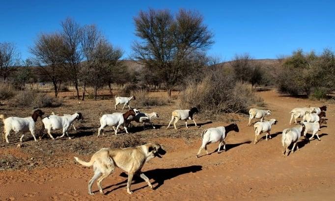 Gobabis, Namibia - Rights to http://www.mysinchew.com