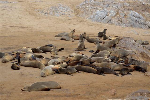 Seal colony at Cape Cross.