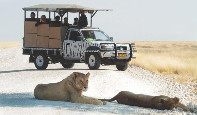 Etosha Safari Game Drive