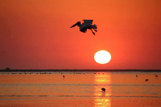 Sunsets and Wildlife Category - Winner: Suzanne Pienaar Van Zyls