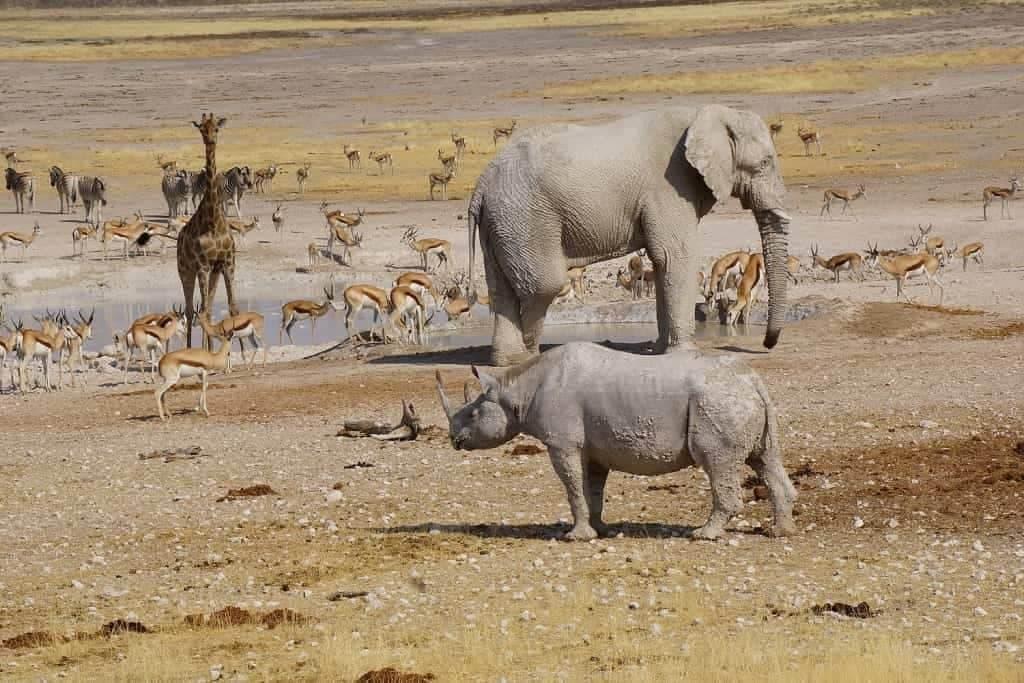 Hubert Seitz amazing wildlife