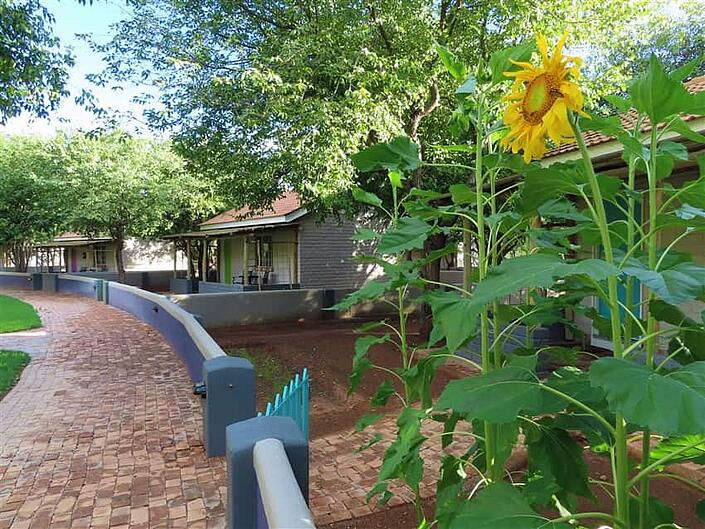 Sunflower with accommodation view