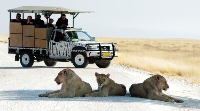 Etosha National Park - Game Drive