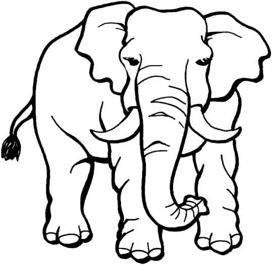 Jungle Animals Coloring Pages 8