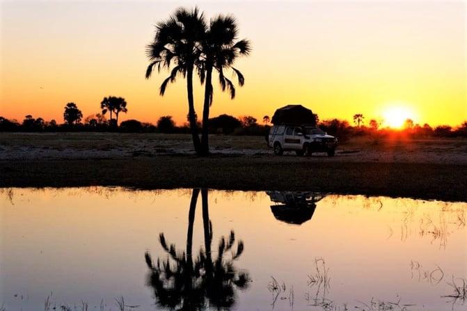 Makalani Palm tree with sunset view