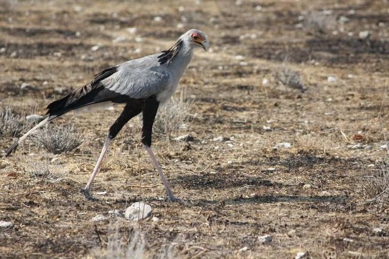 Michael Okako birdlife