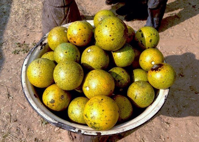 Monkey fruits