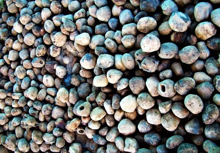 Marula stones