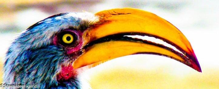 Sonja Steenkamp birdlife