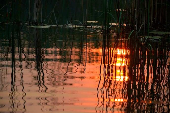 Sonnenuntergang im Schilf 3775