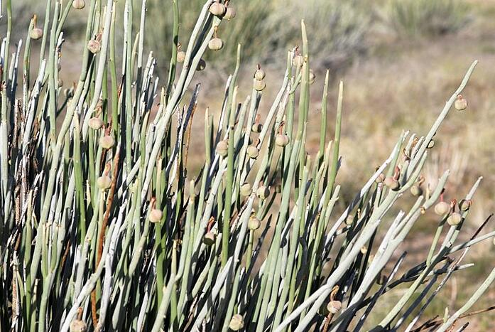 South-African-Plants-2