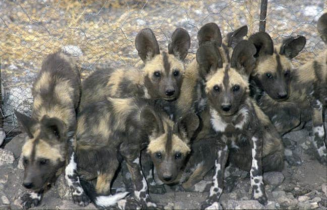 Five of the seven pups look at the camera with curiosity.