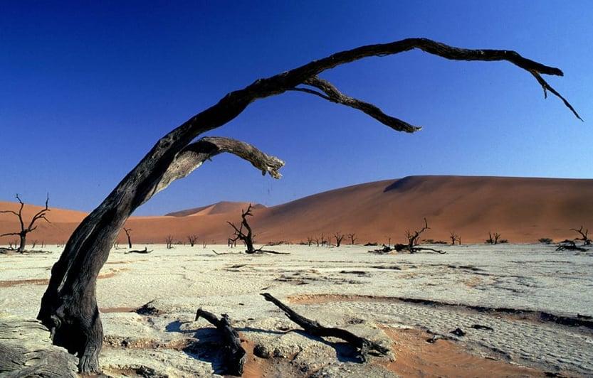 """Curved trees"" - Image: http://ciapannaphoto.wordpress.com"