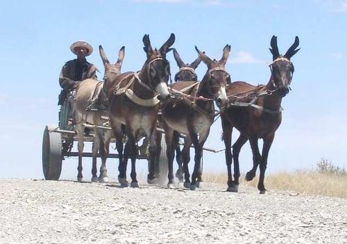 A donkey cart on a dusty Namibian gravel road.