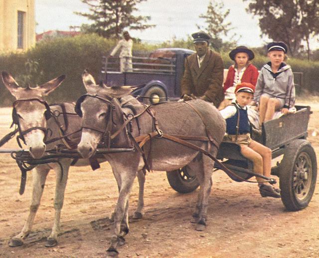 Donkey cart