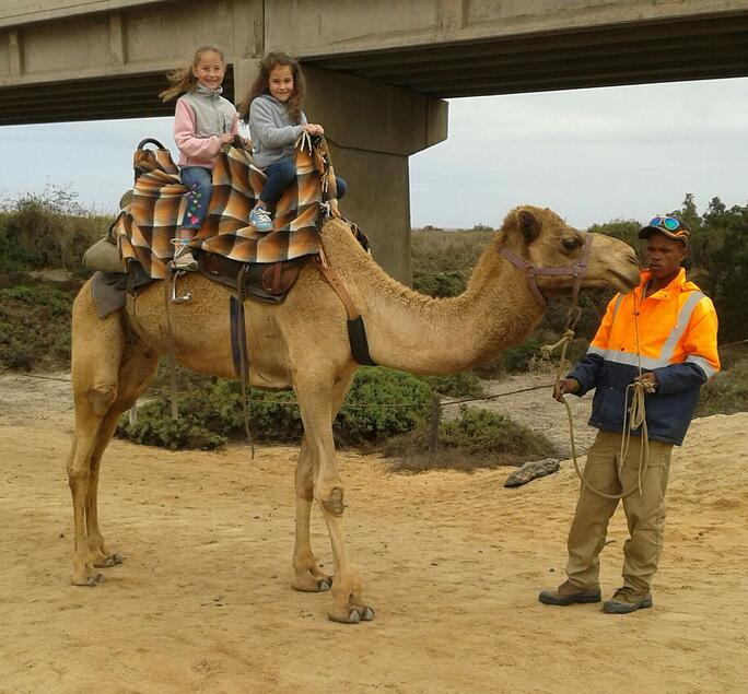 Camel riding in Swakopmund