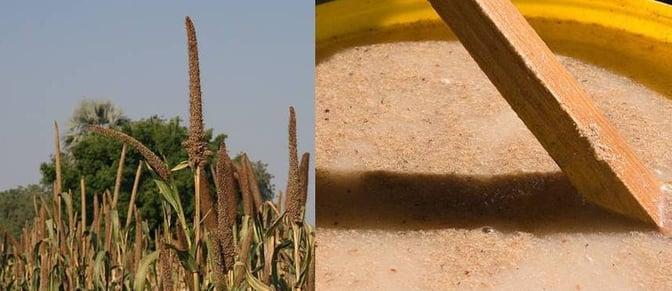 Mahangu plant and Oshikundu mix