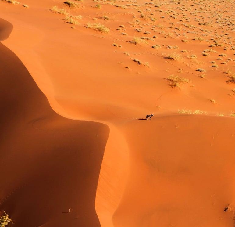 Oryx on a dune near Namib Deaert Lodge