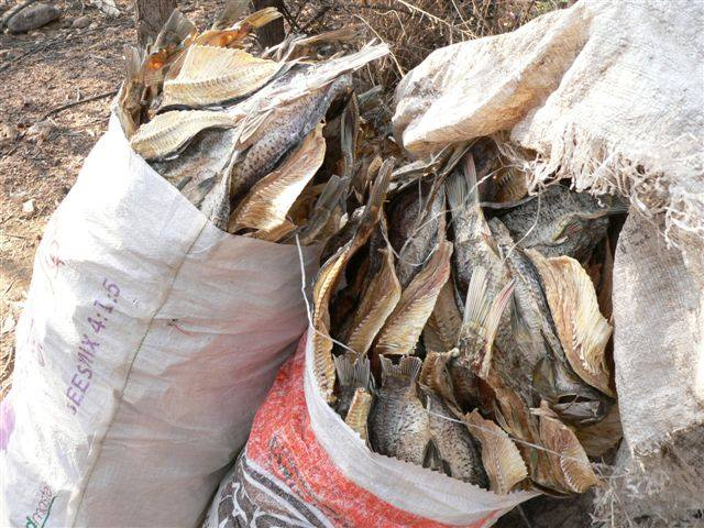 Image: Illegal Fishing Activities in Namibia