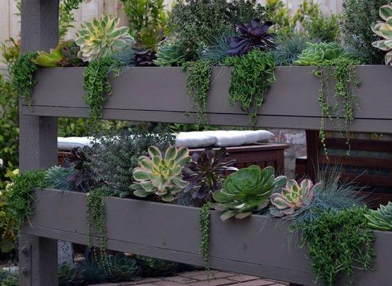 Vertical succulents - Image: Shelterness