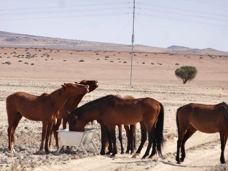 wild horses supplement feeding