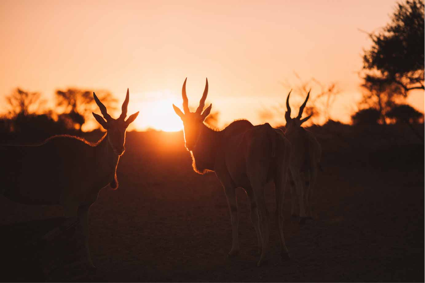 Summer in Namibia-01