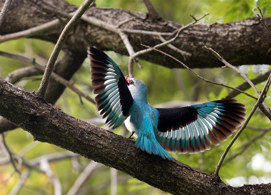 Woodlands-Kingfisher-1.-DSC_0298