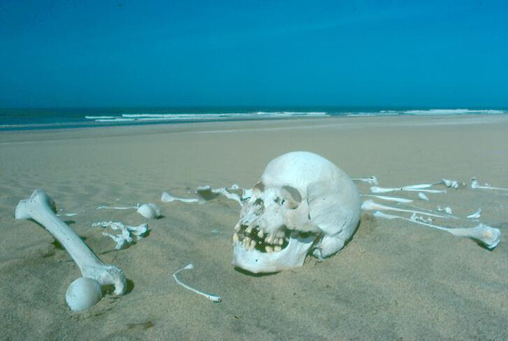 skeleton-coast-skull_Peter-Tarr-edit-2