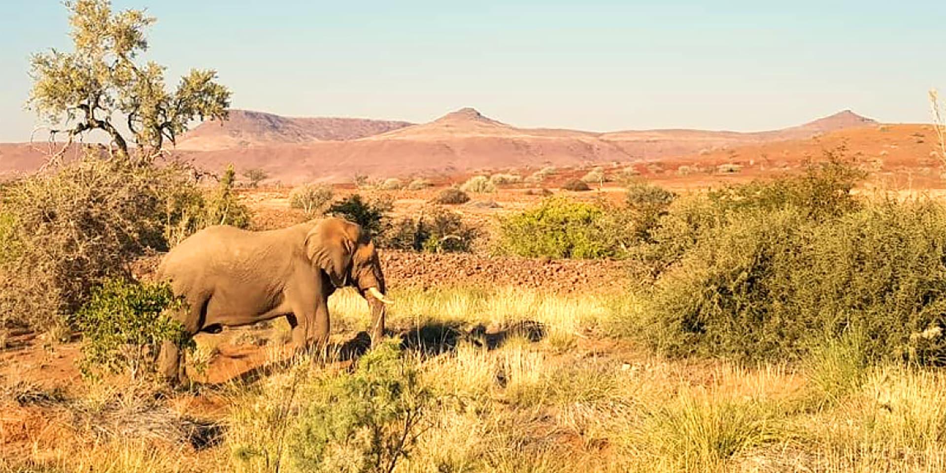 Elefant bei Palmwag Lodge