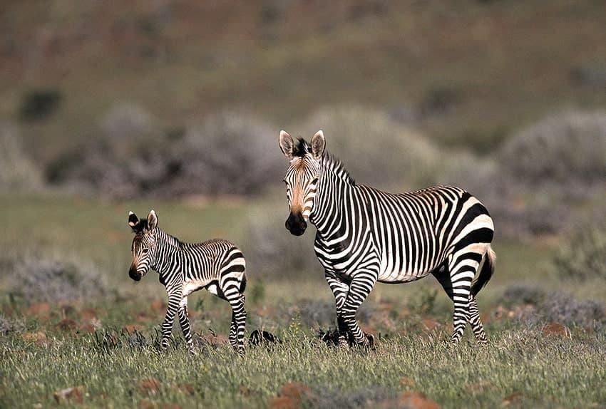Gondwana-Collection-Honouring-Nature