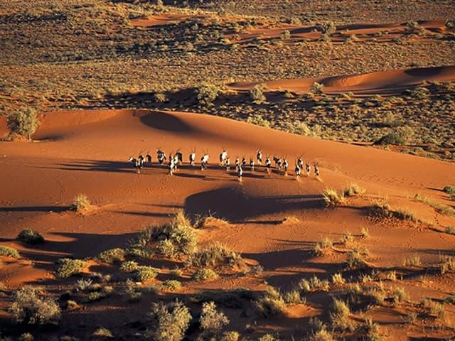Gondwana-Collection-Kalahari-Experience