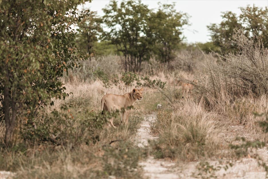 Things to keep in mind when visiting Etosha National Park in Namibia?