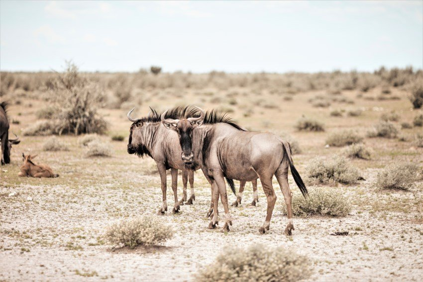 Five things you can learn from animals in Namibia