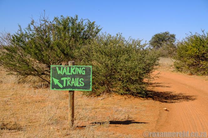 Kalahari Anib Lodge: 12 things to do in Namibia's Kalahari