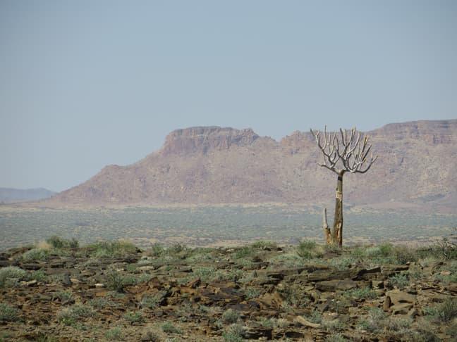 Gondwana Canyon Park re-wilding the land