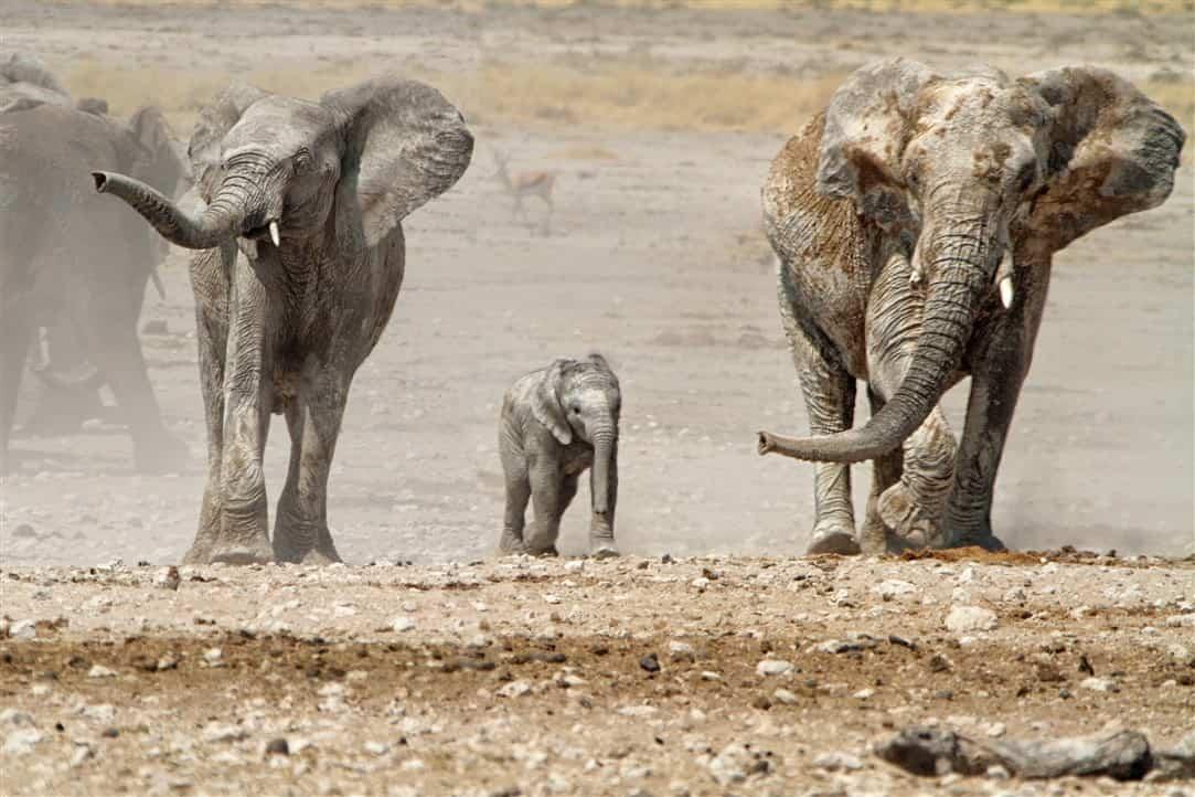 10 reasons to do Safari2Go's Namibian Highlights Tour