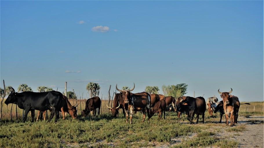 Unique titbits to appreciate when savouring time in Namibia's four O-regions