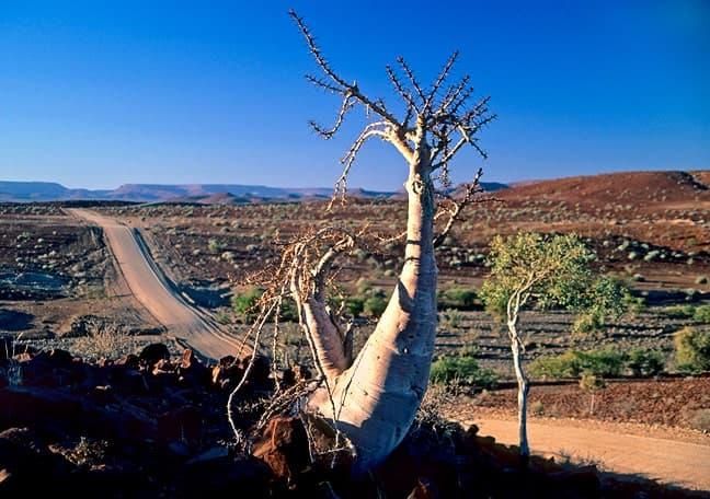 Gondwana Collection Namibia Videos