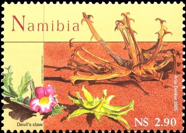 Devil's Claw - Kalahari's Treasure