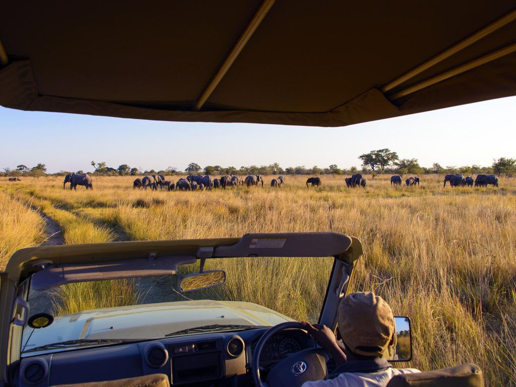 What are your game drive sighting must-sees in Namibia?