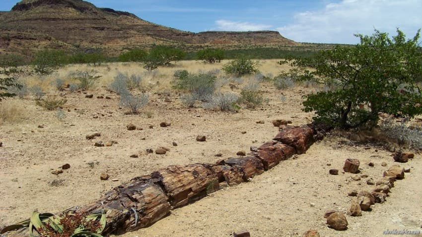 Forest in Namibia become petrified