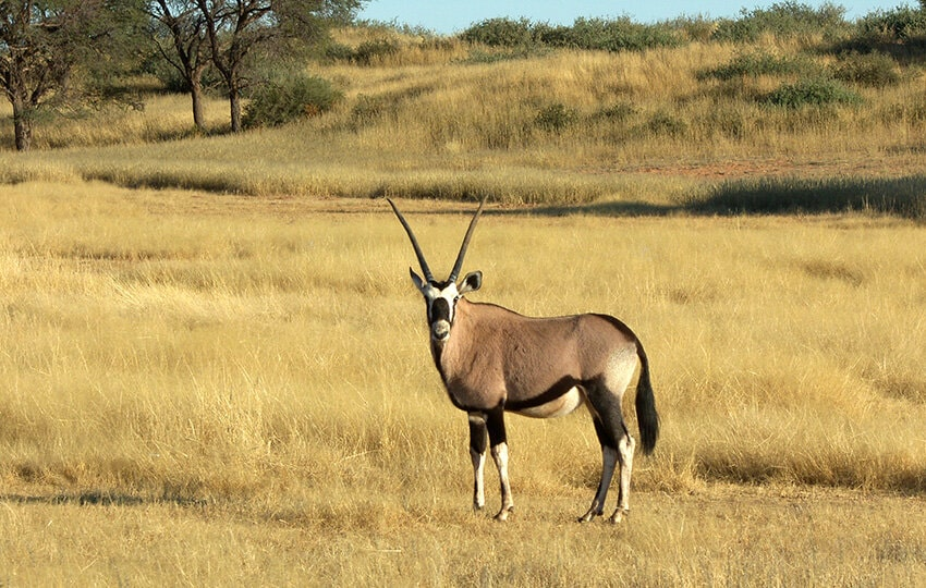 Invitation to the Game Count in the Gondwana Kalahari Park